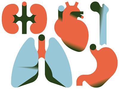 Organs vektorgrafik vector magazine print editorial illustration anatomy organe organs