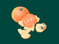 Orange season