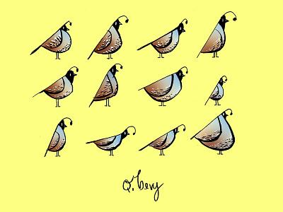 A Bevy of Quails - Part of Nomencreatures personal project quails bird illustrations birds
