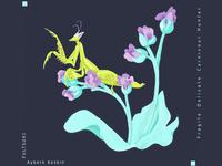 Praying mantis project  / PEYGAMBER DEVESI