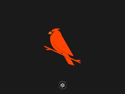 Cardinal Logo identity branding design bird logo cardinal brand identity design animal animal logo illustration logo design logo branding