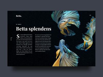 Betta About