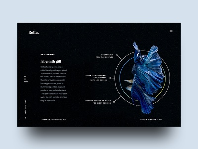 Betta Breathing fighting siamese gradient breathing facts fish ux ui