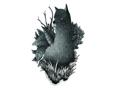 Alpaca Illustration