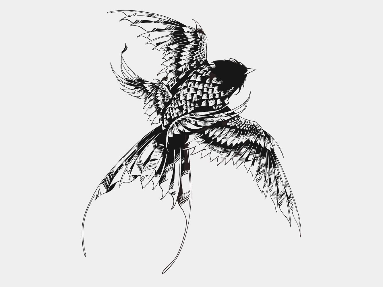 Swallow procreate ipadpro digital ink digital art swallow bird feathers graphic further up ivan belikov illustration