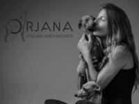Orjana Italian Greyhounds