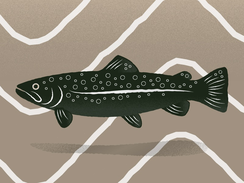 Texas Trout outdoors fishing fish trout pattern texture illustration vector illustrator