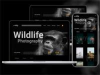 Wildlife-mobile-web-UI