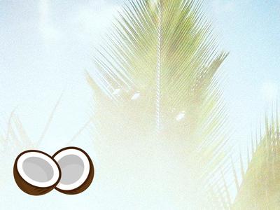 YOCOCO identity mark coconut logo