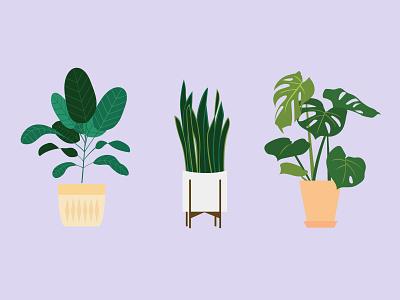 A New Leaf snakeplant monstera fiddleleaf plant plants design illustration