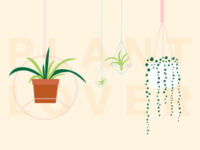 Hangin' Out plant lover hanging plant air plant string of pearls plants