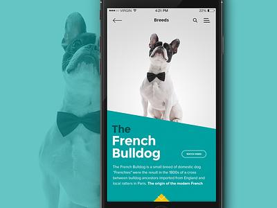 iOS Breed info screen app dog mobile ios breed pet bulldog info ux ui