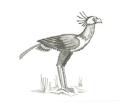 Sketch Secretary Bird