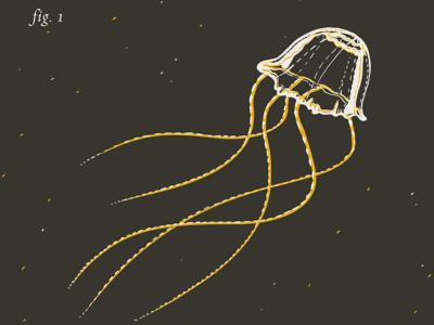 Box Jellyfish Irukandji by Rob Loukotka - Dribbble - photo#22