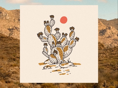 Desert Cactus flower flowers blooming cactus illustration cactus prickly pear arizona desert illustration desert