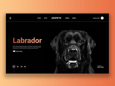 Labrador!
