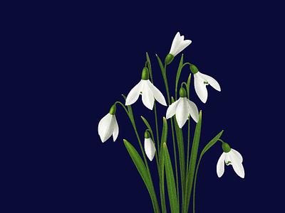 Snowdrops 2d image art texture vector illustration design snowdrops