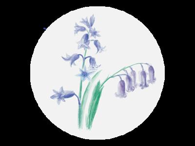 Bluebells website design illustration