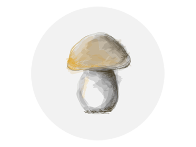 Mushroom - Boletus (Fungus) web website illustration design