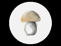 Mushroom - Boletus (Fungus)