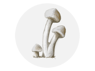 Mushroom website illustration design