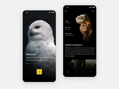 National geographic UI Design App web application minimalist app minimal design website ui ux sketch