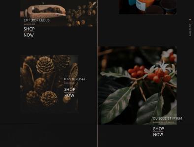ecommerce for Ipazia Venice website concept graphic design ui webdesign ecommerce