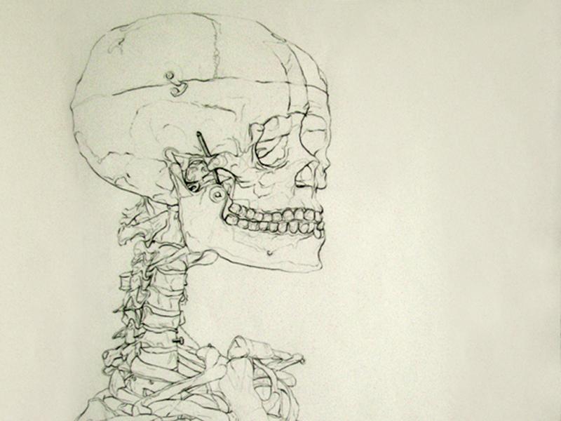 Blind Contour Line Drawing Definition : Blind contour skeleton drawing by sofiya nuber dribbble