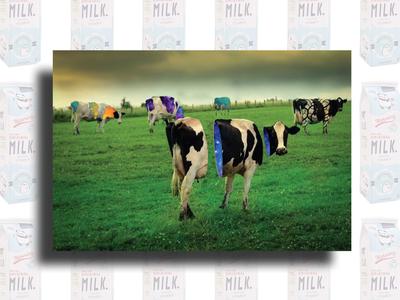 Galaxy Milk