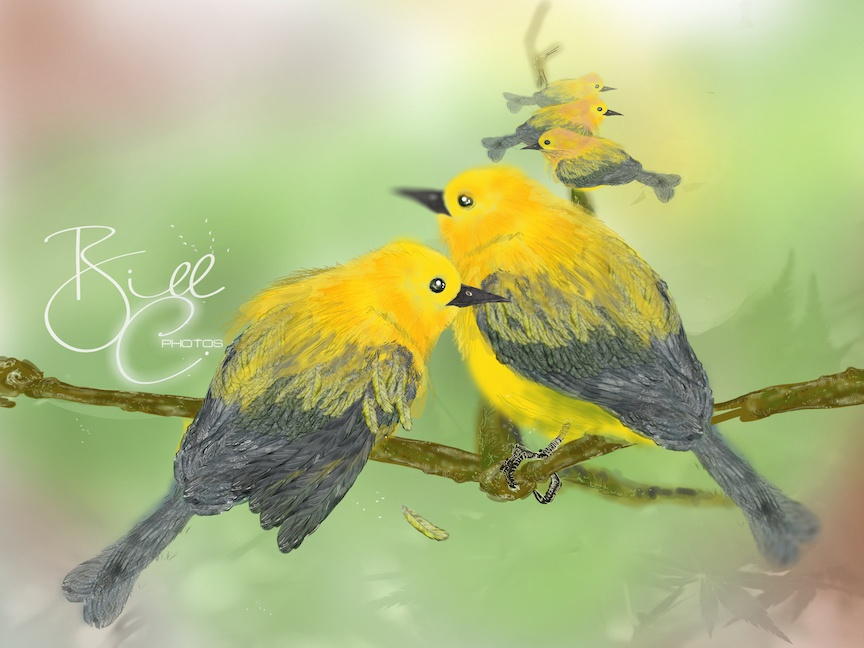 Prothonotary Warblers hand drawing sketch print huion tablet adobe photoshop painting illustration feather couples fly stand birds warblers prothonotary