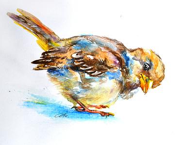 Sparrow логотип дизайн цветной карандаш животное акварель portait искусство животных иллюстрация