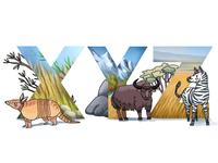 Alphabet: xenurine, yak, zebra