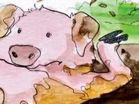 Dirtyfeet Pig