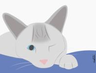 Cat cat drawing draw illustration ui
