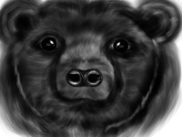 Bear drawing with iPad Pro and Apple pencile in Procreate