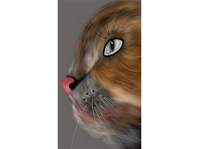 Realistic Cat Design with iPad Pro and Procreate procreate ipad pro cat drawing realistic cat
