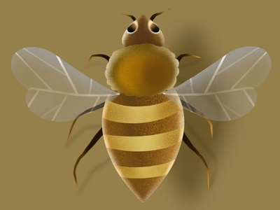 Honeybee illustration