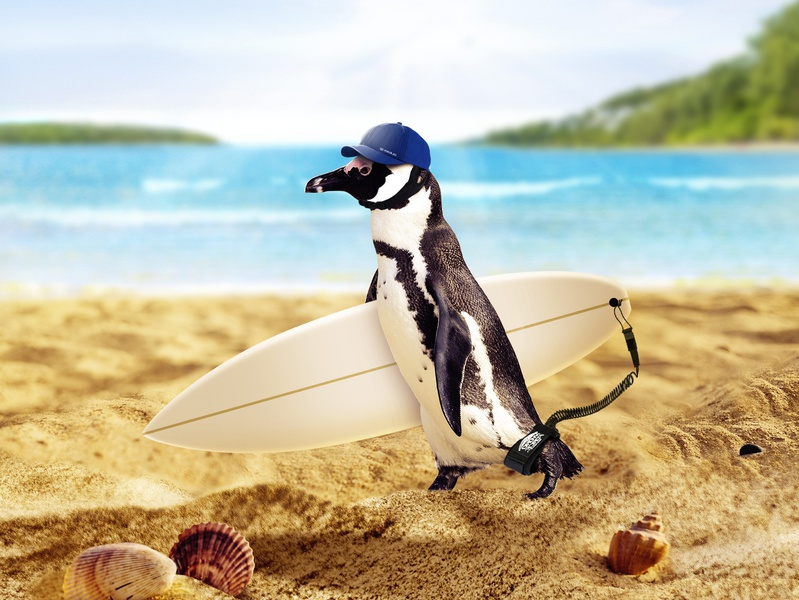 Surfer Penguin photo manipulation sun wave waves surfboard beach surf penguin photoshop art photoshop imagination fantasy animal art manipulation imaginary world animal