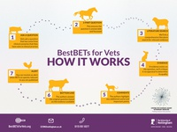 BestBETs for Vets - Infographic Design