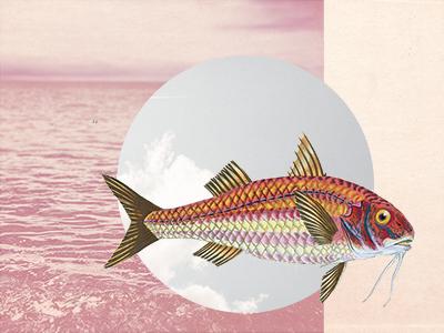 1 flyingfish dribbble