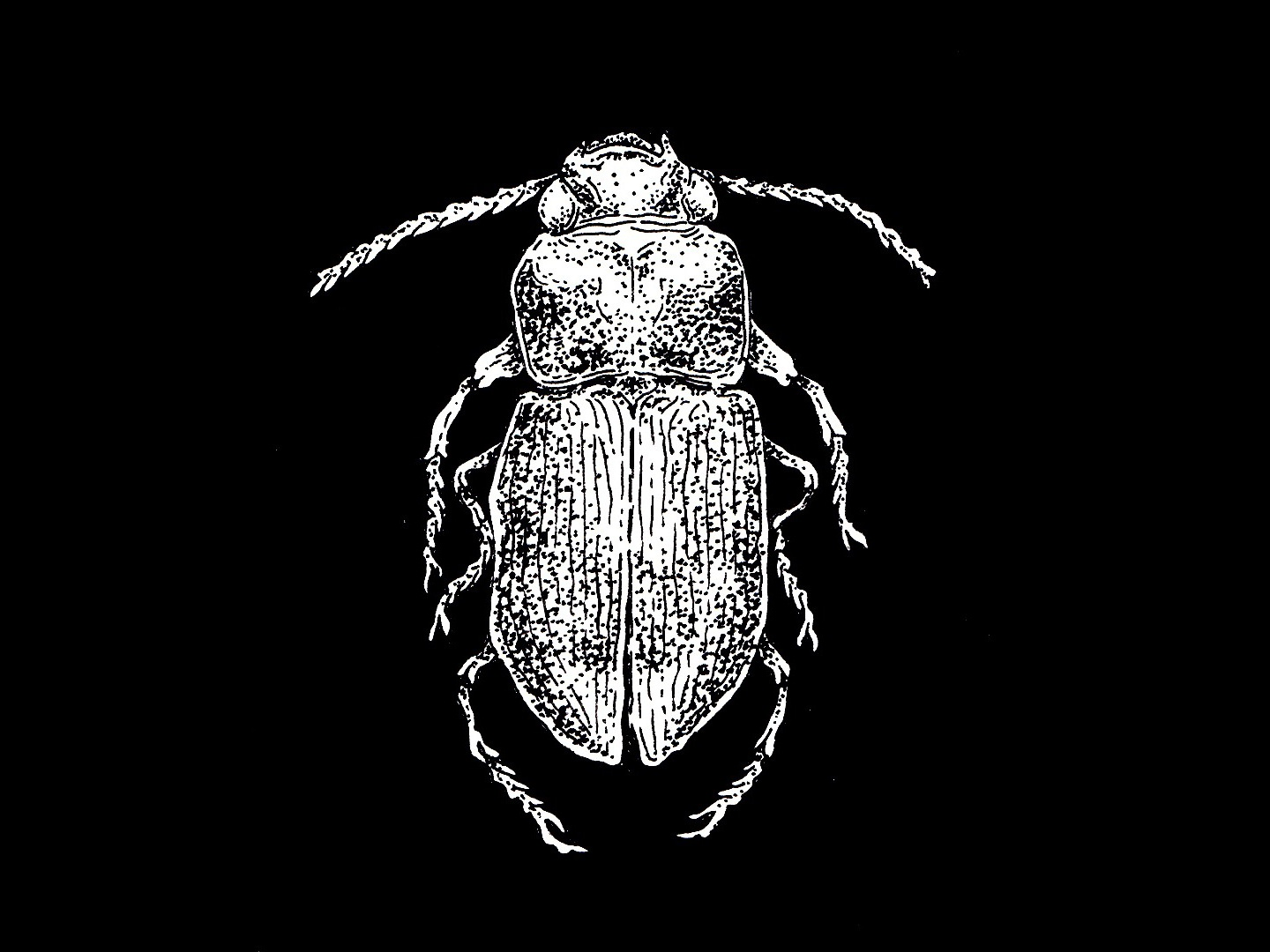 dung beetle illustration illustration art director design black and white black white dung beetle beetle insects dotted dotwork linear linear illustration insect ink illustration inktober ink traditional illustration traditional art traditional illustration