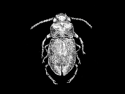 dung beetle illustration
