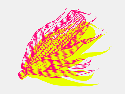 Corn vegetable woodcut miniprint etching engraving popcorn corn food graphics flat illustration