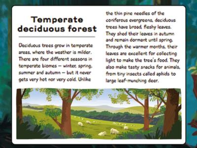 Forest Frame picturebook