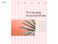 Houseplants home