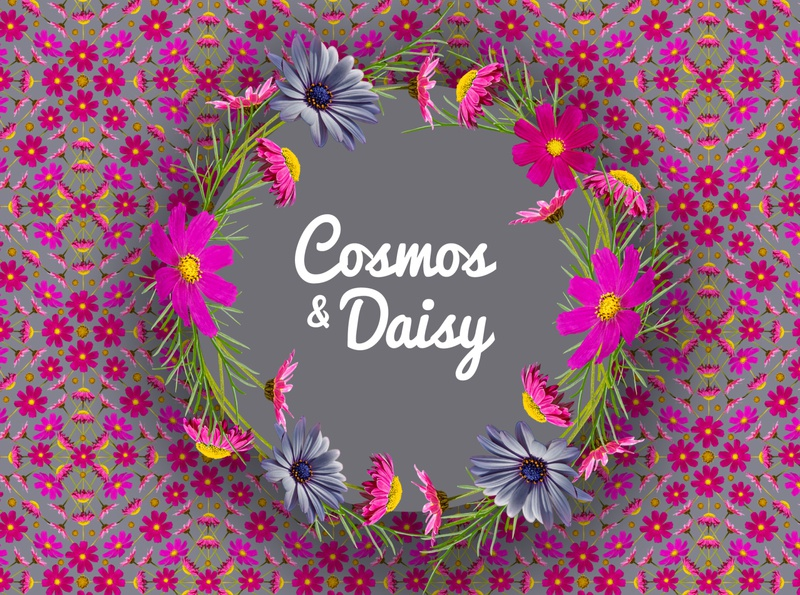 Cosmos and Daisy Floral Patterns surface design design photography isolated behance pattern daisy cosmos flower floral photo
