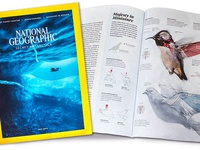 'Majesty in miature' – National Geographic