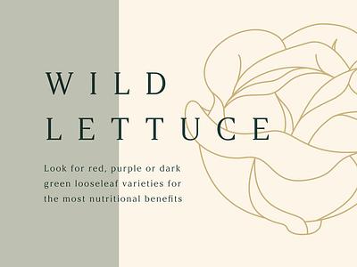 Wild Lettuce figma motion animation food slideshow slides presentation series branding graphic illustration
