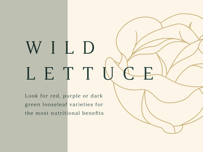 Wild Lettuce figma motion animation food slideshow slides presentation series branding graphic illustration