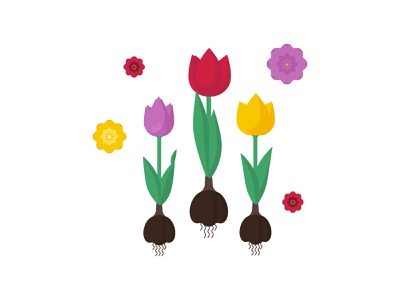Tulips plant bouquet tulips tulip flora flowers art vector design illustrator illustration flat 2d